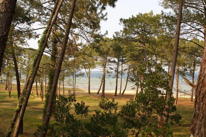 la cabane au bord du lac, chambre avec jacuzzi